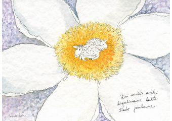 AD41/127 Dvi mažos avelės begaliniame balto žiedo jaukume